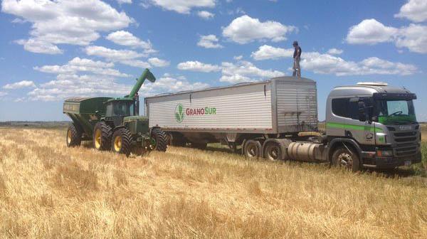 Argentina importará trigo