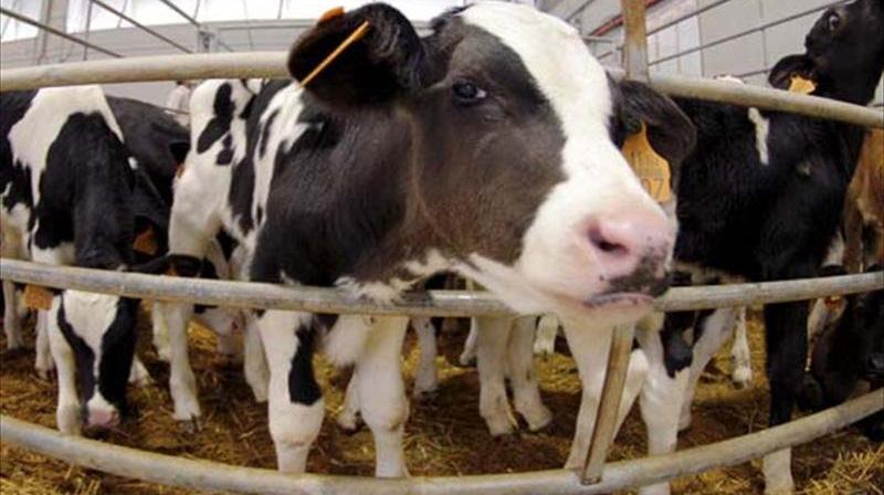 Charla sobre ganadería