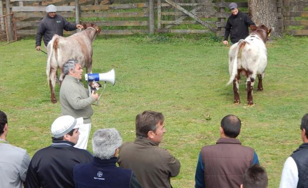 Más expo, más campo, más Nueve de Julio Rural