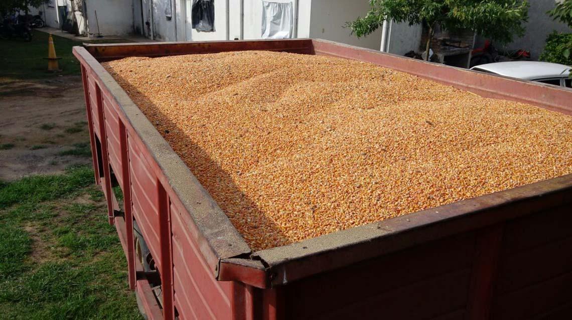Lo detuvieron por robar maíz