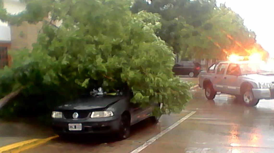 Se cayó un árbol sobre un automóvil