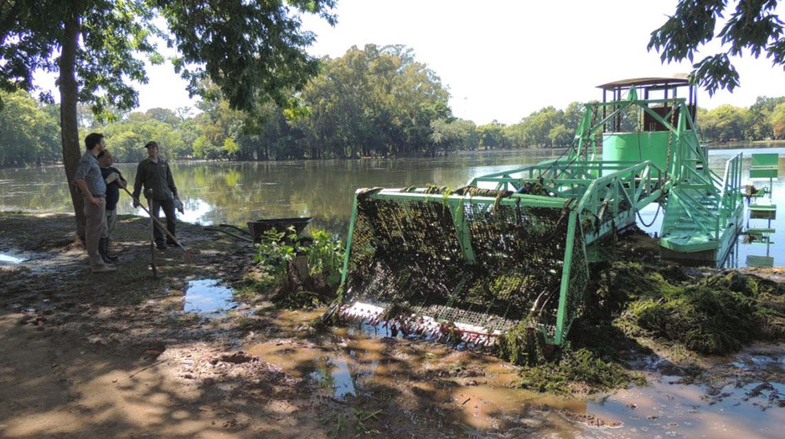 Extracción de algas en el parque