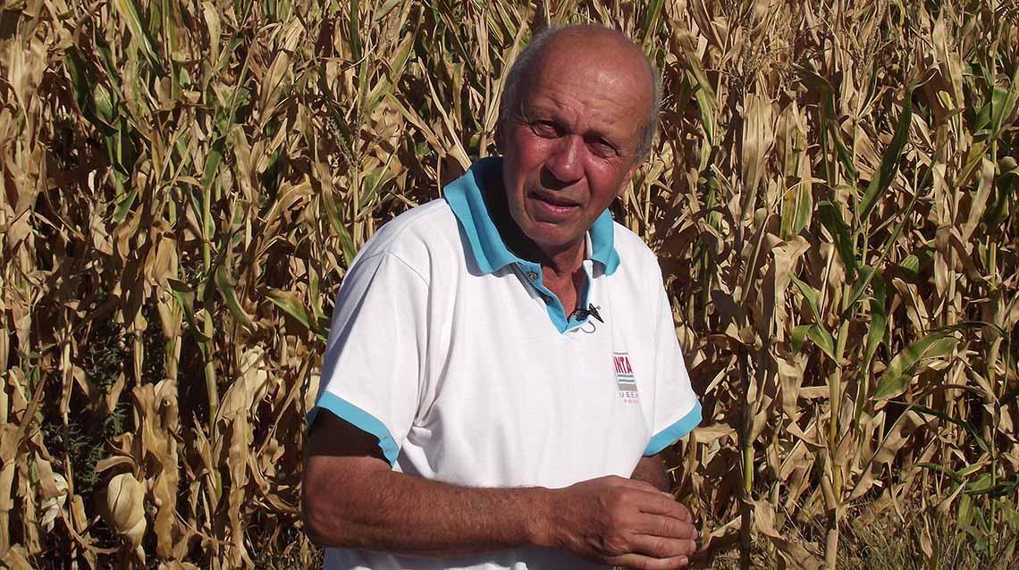 Perspectivas: cultivo de maíz