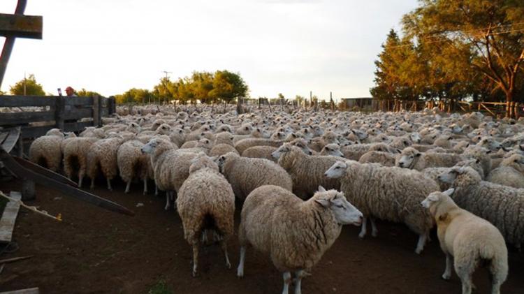 Ley ovina Argentina