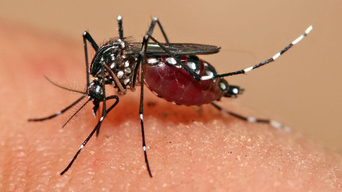 Investigan en Chacabuco un caso de dengue