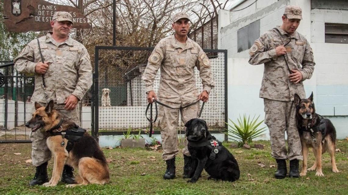 Condecoraron 3 perros policías