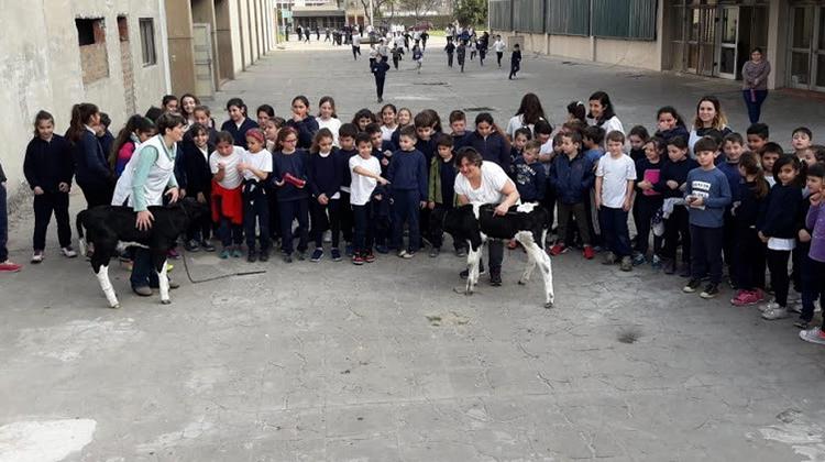 Concurso Crianza del Ternero